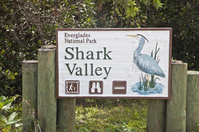 Ponto Miami O que fazer em Miami Shark Valley