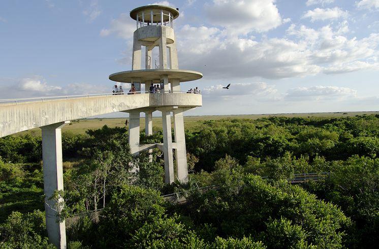 Ponto Miami O que fazer em Miami Shark Valley 3